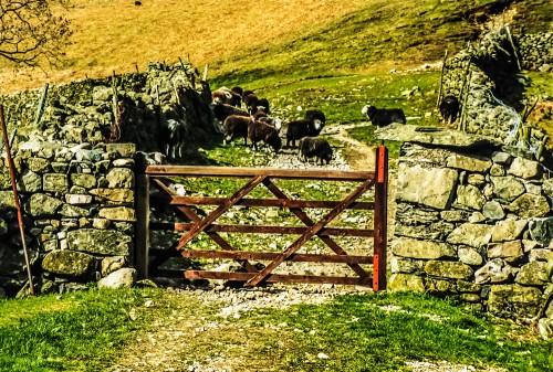 gate_21432514532_o