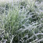 Icy grass #366photos2020 #366photos