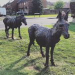 Donkeys #366photos2020